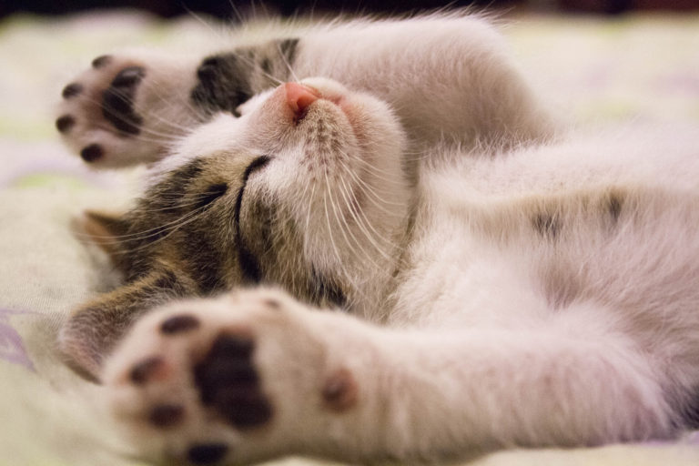 Caring For Kittens – A Guide To New Cat Parents