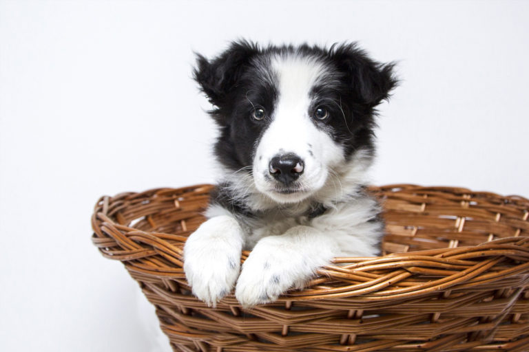 Caring For A Puppy – A Guide To New Puppy Parents