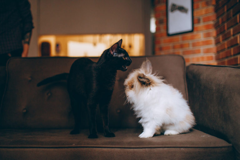 Introducing A New Cat To Your Dog