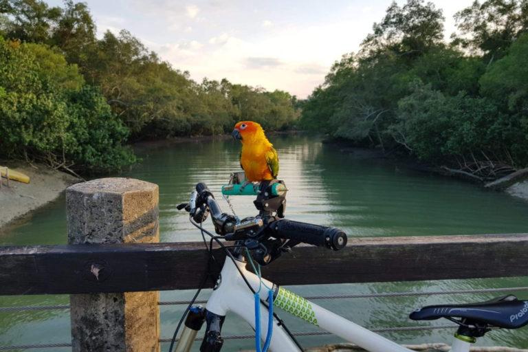 Pet Parakeet – A Social Bird As Companion