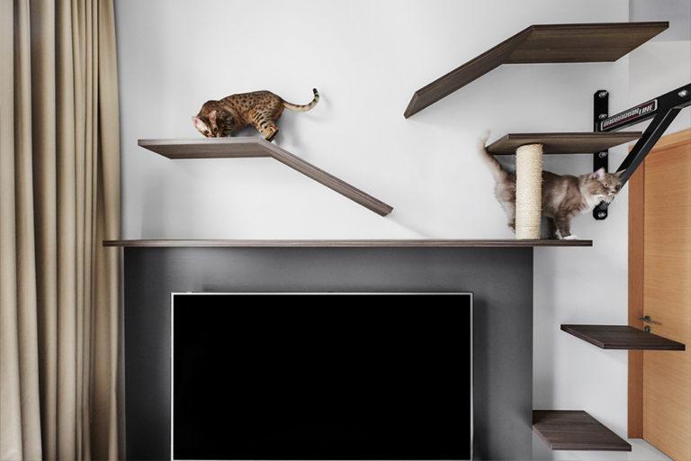 Cat-Friendly Condominium Which Maximises On Vertical Space