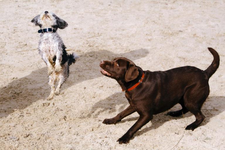 Dogs Body Language Explained