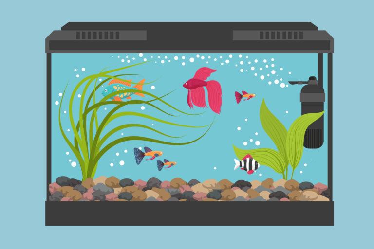Aquarium Basics For Successful Fishkeeping