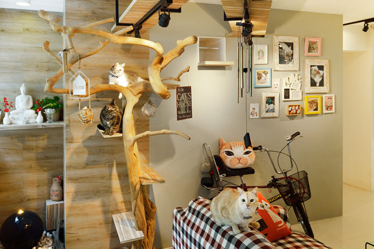 Cat-Friendly Home That Is Nature Inspired