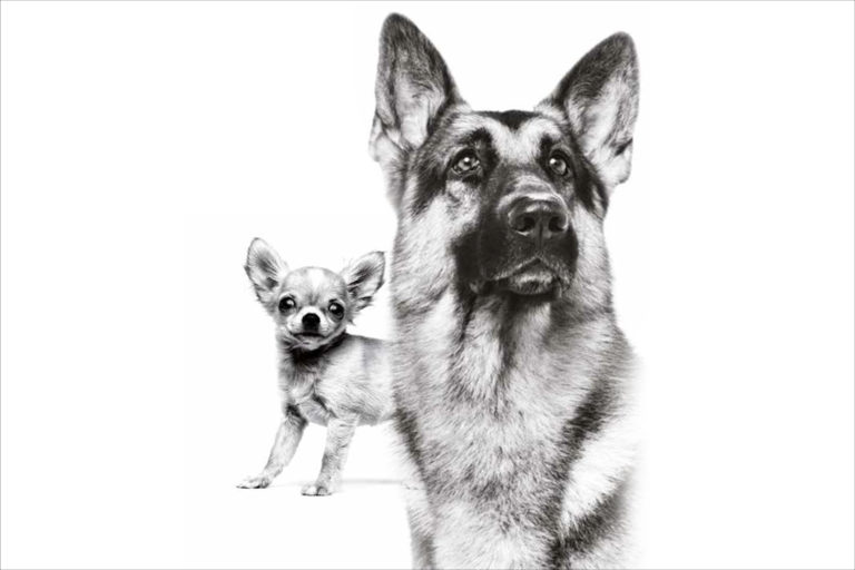 Give Your Breed Dog Nutrition Tailored To Its Needs