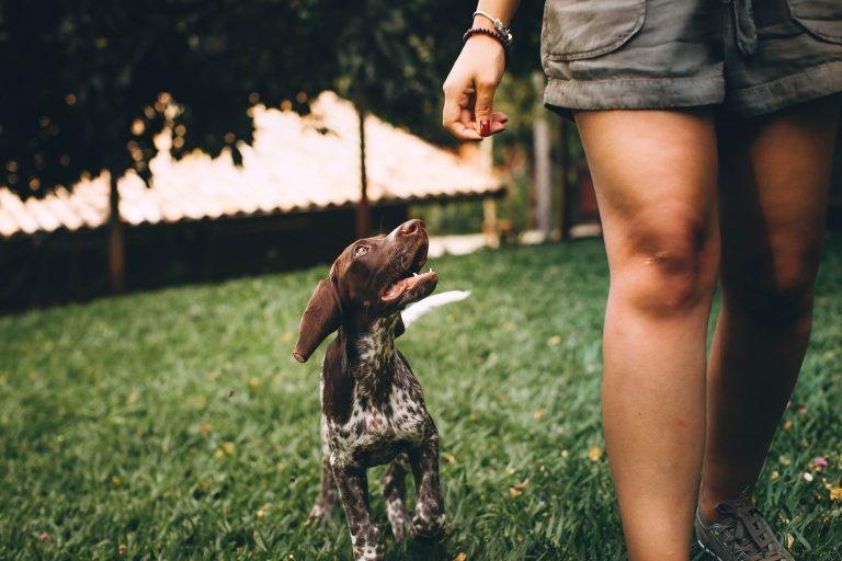 Help! – my dog follows me everywhere
